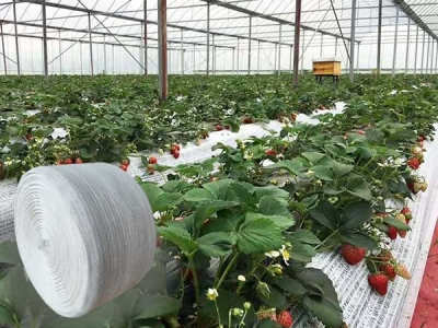 DELI Factory New Patent Product White Woven Plastic Separation Net for Strawberry